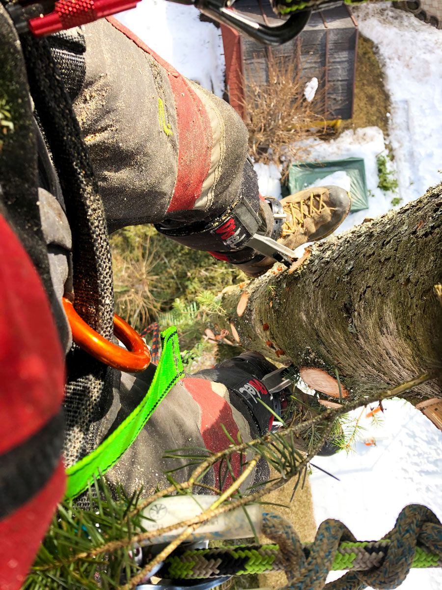 Beim der Baumpflege mit Blickwinkel aus der Vogelperspektive