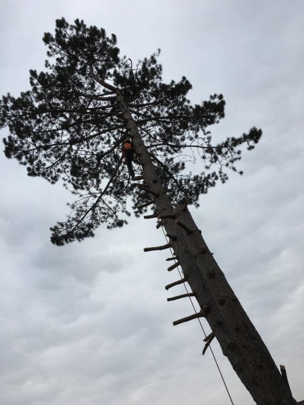 Problembaum- und Gefahrenbaumfällung